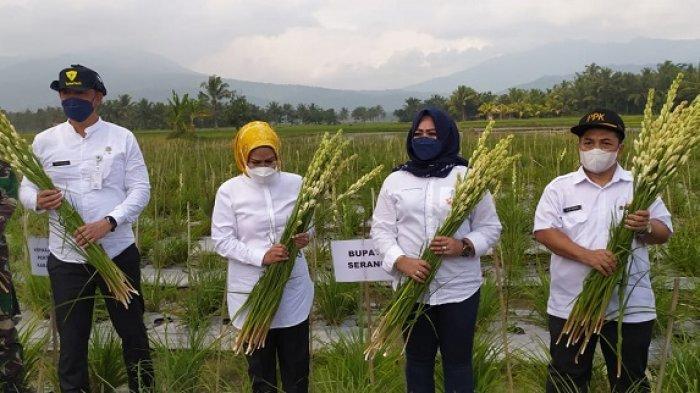 Bupati Serang Ingin Jadikan Lahan Bunga Sedap Malam di Wilayahnya sebagai Agrowisata