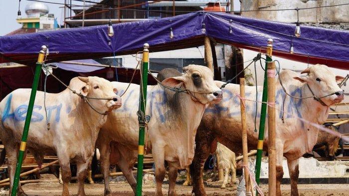 Rizky Billar dan Lesti Kejora beli tiga ekor sapi kurban dalam menyambut Hari Raya Idul Adha 2021