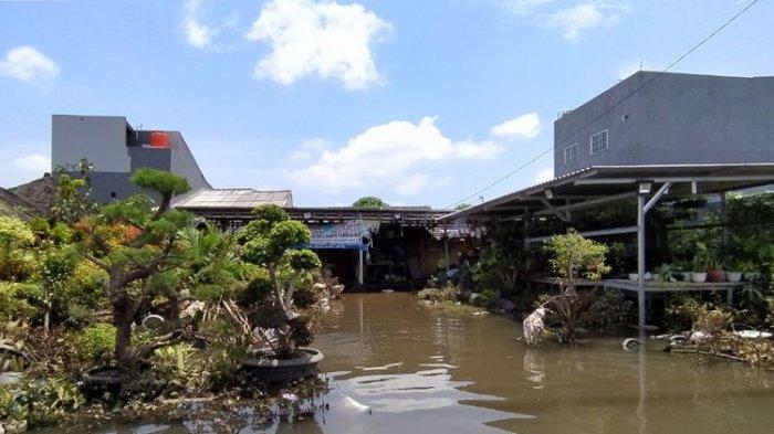 Korban Banjir Tangerang Rugi Puluhan Juta Rupiah, Tanaman Hias Tak Lagi Laku Dijual