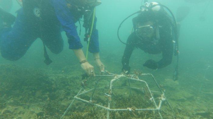 Perairan Pulau Liwungan Pandeglang Dijadikan Tempat Transplantasi Terumbu Karang