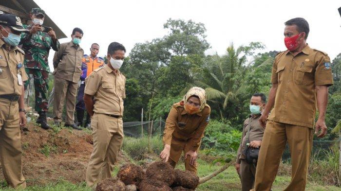 Bupati Serang Ratu Tatu Chasanah memperlihatkan porang di Kecamatan Mancak, Selasa (22/6/2021).