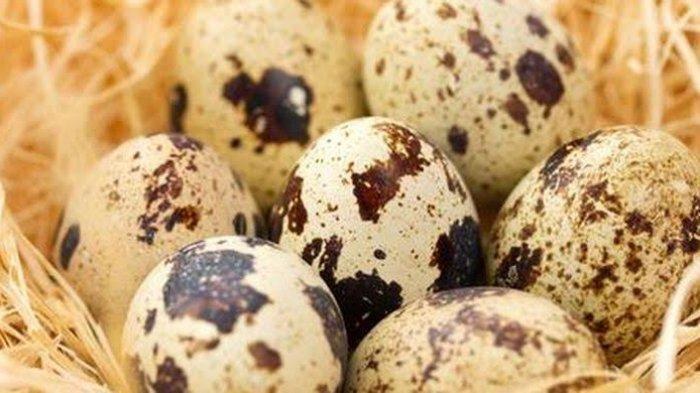 Manfaat Telur Buyung Puyuh untuk Kesehatan Tubuh, Bisa Cegah Penyakit Kronis