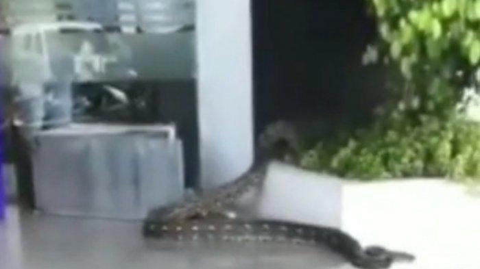 Ular Piton 3 Meter Tiba-Tiba Muncul di Kantor Bank dan Bikin Panik, Berasal dari Mobil Nasabah
