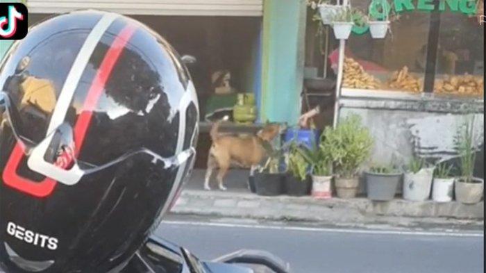 Viral Ibu Penjual Gorengan Rajin Beri Makan Anjing Siang Malam, Tak Dilempar Apalagi Diusir