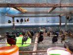 burung-penjual-burung-di-cilegon.jpg