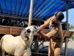 dinas-peternakan-kabupaten-lebak-melakukan-pemeriksaan-hewan-kurban-2.jpg