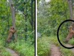 fakta-viral-penampakan-harimau-di-hutan-grobogan.jpg