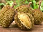 ilustrasi-durian-6.jpg