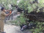 ilustrasi-pengendara-sepeda-motor-tertimpa-pohon-tumbang.jpg