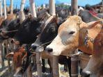 ilustrasi-peternakan-sapi.jpg