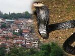 ilustrasi-ular-masuk-ke-dalam-rumah.jpg