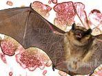 ilustrasi-virus-nipah-yang-ditularkan-kelelawar.jpg