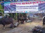 lapak-penjual-hewan-kurban-kerbau-di-kampung-pamindangan-kabupaten-serang.jpg