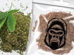 narkotika-jenis-tembakau-gorilla.jpg