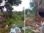pohon-ditebang-di-kuburan.jpg
