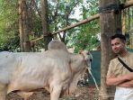 raffi-ahmad-kurban-40-ekor-sapi-dan-kambing-sebagian-disalurkan-untuk-tenaga-kesehatan.jpg