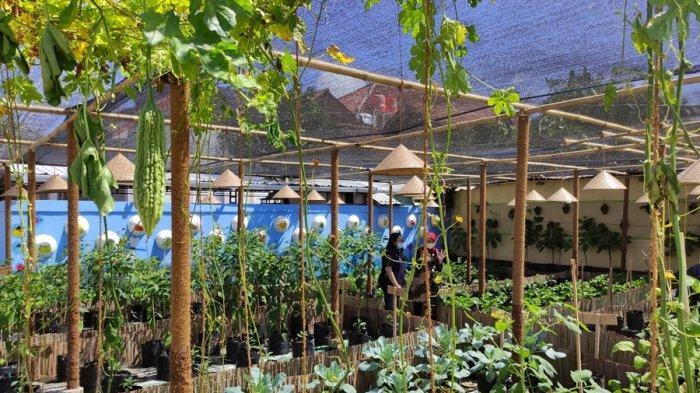 Keren Nih, Ada Sawah dan Kebun Sayur di Kompleks Pendopo Pemkab Kebumen, Ini Maksud Tujuan Bupati