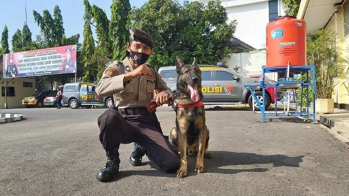 Mengenal Aiptu Dwiyanto Polisi Tegal Kota yang Jadi Pawang Anjing K9 Terbaik se Indonesia