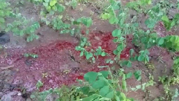 Bikin Merinding Warga, Air Berwarna Merah Pekat Keluar dari Tanah Kosong di Tawangsari Sukoharjo