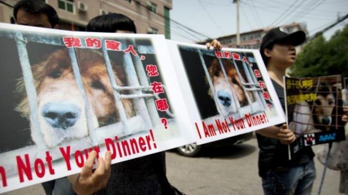 Ikuti Jejak Karanganyar dan Sukoharjo, Salatiga Resmi Larang Jual Beli dan Konsumsi Daging Anjing