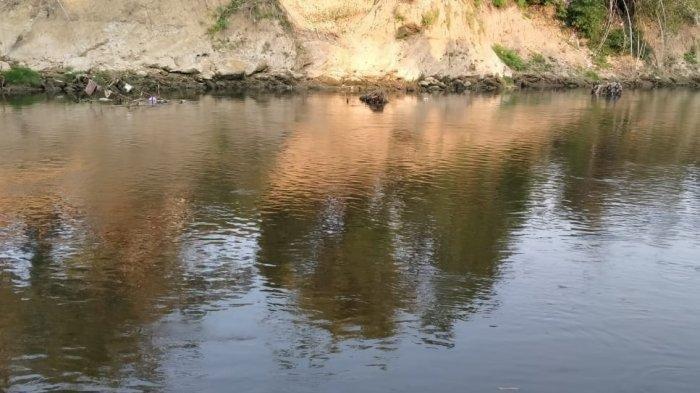 Ikan Mabuk akibat Sungai Bengawan Solo di Blora Tercemar Limbah Ciu, Penghasilan Warga Menurun