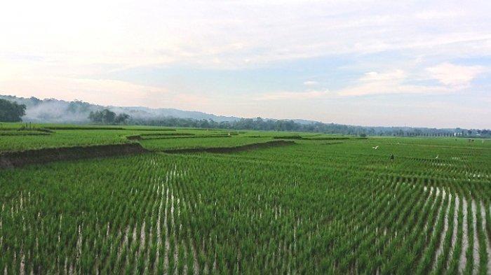 Jawa Tengah Bukan Lagi Produsen Terbanyak Beras, Ini yang Dilakukan Distanbun Jateng