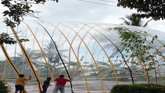 Balon Udara Jatuh di Jatipuro Karanganyar, Aliran Listrik Padam Dua Jam, Berikut Cerita Kejadiannya