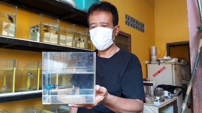 Kisah Sukses Yudya, Pensiunan Karyawan Pertambangan, Laris Manis Berbisnis Ikan Cupang di Tegal