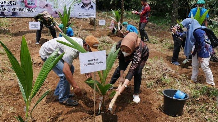 Dongkrak Produksi Gula Organik, Kementan Bantu 2.700 Bibit Pohon Kelapa bagi Petani di Purbalingga