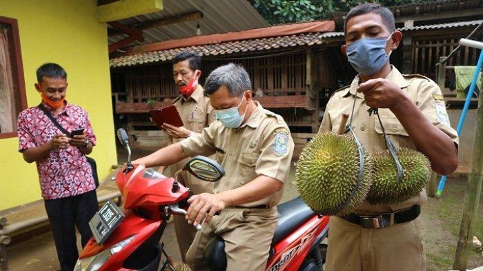 Berasa Manis dan Legit, Durian Kartana Purbalingga Diajukan Dapat Sertifikasi Varietas Unggul Lokal