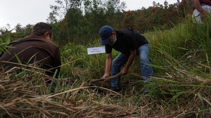 Lahan Kentang di Hutan Pegunungan Dieng Batang Meluas, Dispaperta Tanam Pohon Cegah Longsor