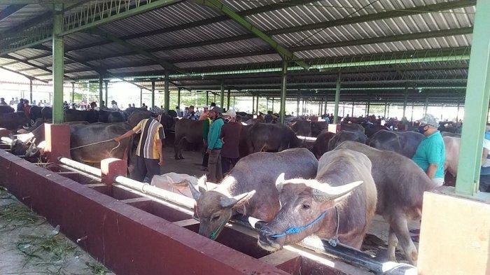 Jelang Hari Raya Iduladha, Segini Harga Daging Kerbau di Pasar Hewan Ternak di Kudus