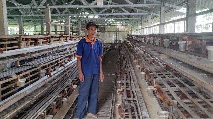 Peternak Ayam Petelur Lagi Lesu, Harga Anjlok di Banjarnegara, Martono Beberkan Penyebabnya