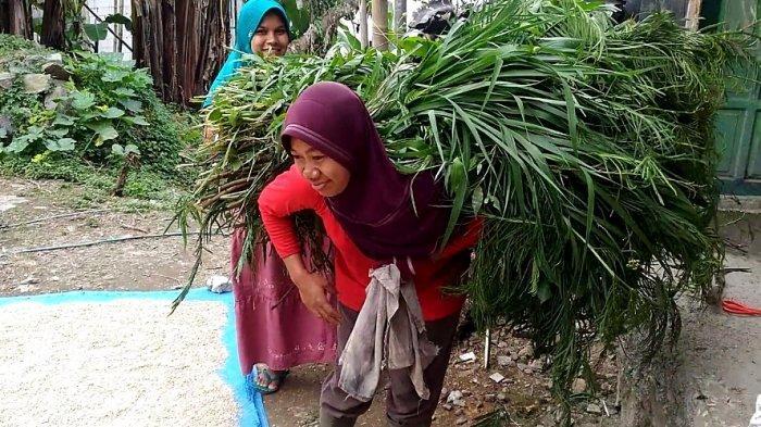Kisah Ibu Pencari Rumput di Banjarnegara, Jual Beras demi Beli Kuota: 'Gak Ada Kuota Gak Belajar'