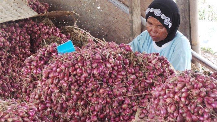 Pemerintah Resmikan Gudang Sistem Resi Gudang Bawang Merah di Brebes, Ini Manfaatnya