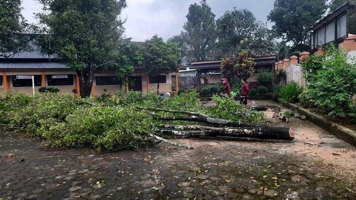BPBD Batang Ingatkan Potensi Cuaca Ekstrem saat Pancaroba, Waspadai Pohon Tumbang