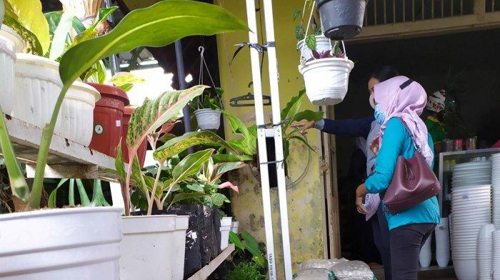 Slamet, penjual tanaman hias di Baturraden, Kabupaten Banyumas sedang melayani konsumen, Selasa (29/9/2020).