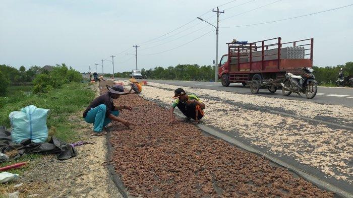Mumpung Jalingkut Belum Diresmikan, Warga Pesisir Kota Tegal Manfaatkan Jalan Buat Jemur Rebon