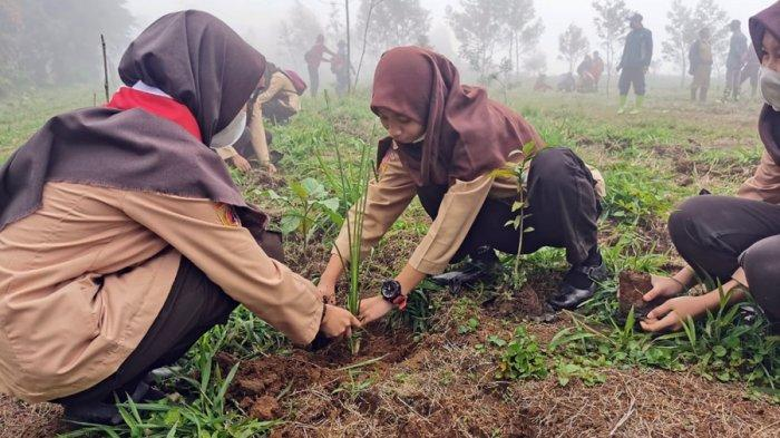 Siswa SMAN 1 Batur Tanam Ribuan Bibit Kacang Macadamia di Dieng Banjarnegara, Ini Tujuannya