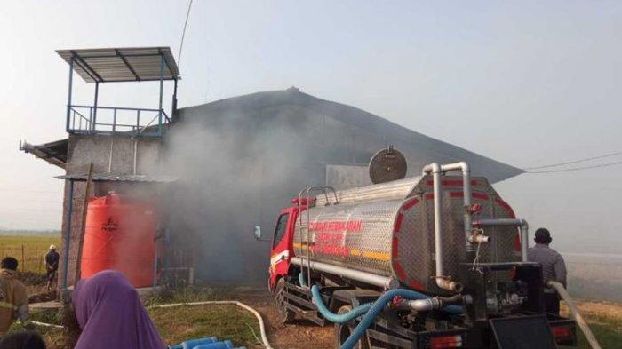Kandang Ayam di Grobogan Terbakar: 40 Ribu Ayam Terpanggang, Kerugian Hingga Rp 2,5 Miliar