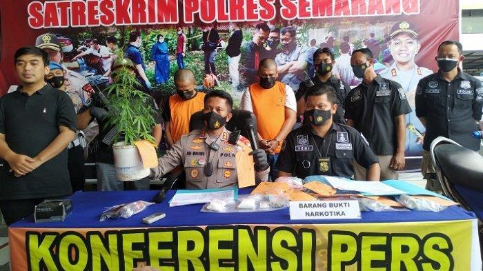 Geledah Rumah Warga Bergas, Anggota Polres Semarang Temukan Pohon Ganja di Atas Kamar Mandi