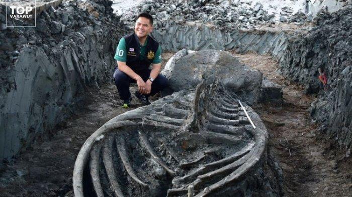 Kerangka Paus Purba Ditemukan di Samut Sakhon Thailand: Nyaris Utuh, Diduga Berumur 5000 Tahun