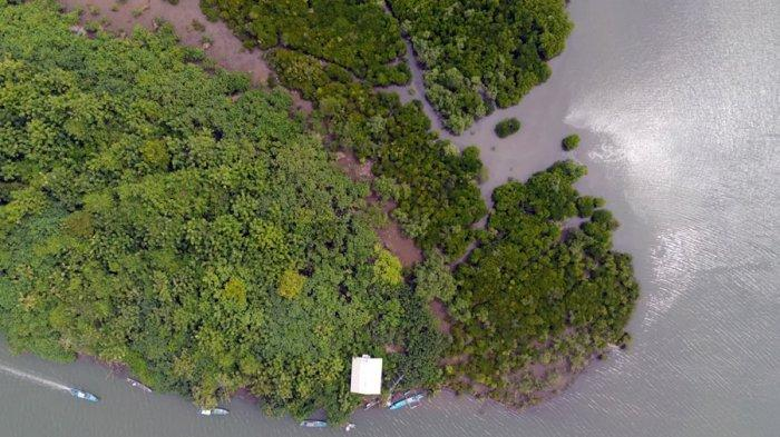 Kawasan hutan mangrove di Segara Anakan, Kabupaten Cilacap.