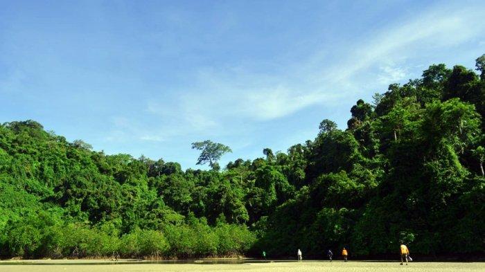 BKSDA Jateng Temukan Tanaman Mangrove Kategori Langka di Segara Anakan Cilacap, Ini Cirinya