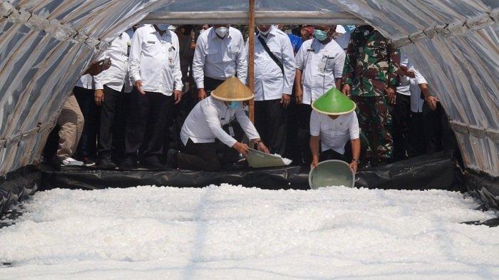 Tergiur Harga Jual Tinggi, Petani Garam di Kebumen Mulai Produksi Garam Piramid