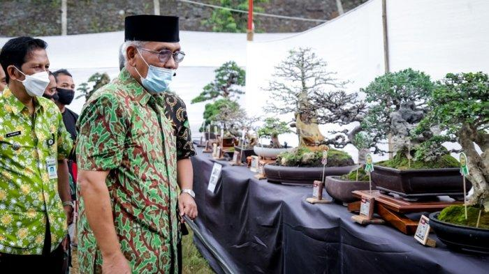 Pameran dan Kontes Bonsai Banjarnegara, 600 Tanaman dari Berbagai Daerah di Jateng
