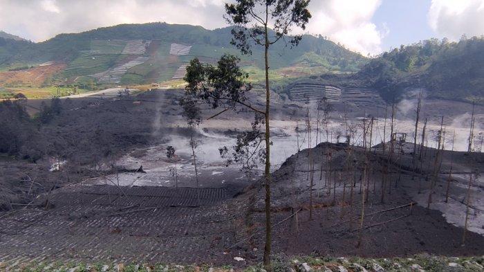 Lahan Pertanian Rusak di Sekitar Kawah Sileri Dieng, Tertutup Lumpur Hitam Pekat