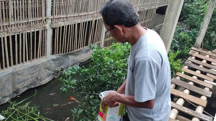 Peternak Ayam di Banjarnegara, Bangun Kolam Ikan di Bawah Kandang, Tak Lagi Bingung Beli Pelet