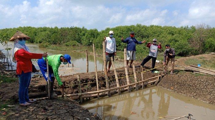Pemkab Pati Makin Seriusi Kembangkan Sektor Perikanan, Misalnya Budidaya Nila Salin