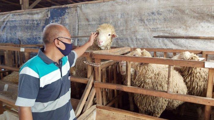 Jaka Ketiban Berkah Pandemi Covid-19, Penjualan Hewan Kurban Meningkat di Kota Tegal